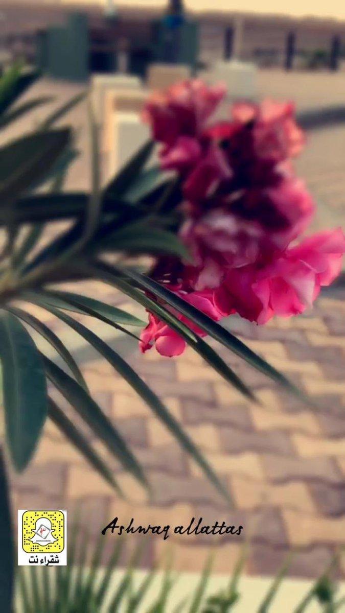 Photo of منتزه حي المصيف بجبل #غسله بالقرائن عدسة:اشواق العطاس