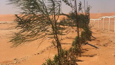 Photo of بلدية القصب تغرس أكثر من (4600) شجرة في روضة العكرشية وميدان الفروسية