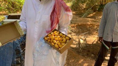Photo of جولات على مزارع محافظة شقراء لفحصها والتأكد من خلوها من المبيدات