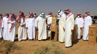 Photo of إطلاق مجموعة من الظباء في محمية الجرعاء بالقرائن