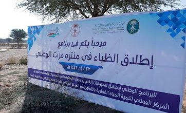 Photo of بحضور الحمين  اطلاق 15 ظبيا في منتزه مرات الوطني